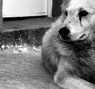 Perro solitario