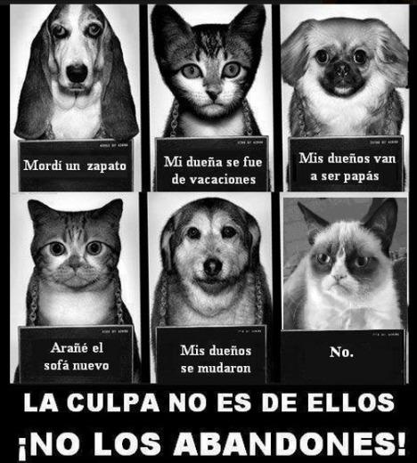 No al abandono de mascotas