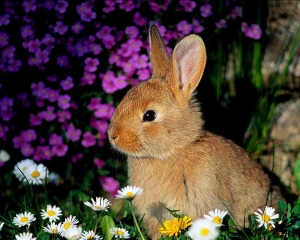 fondos-animales-conejos
